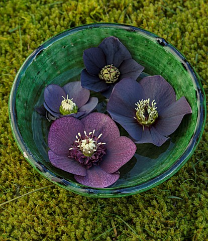 KAPUNDA_PLANTS_BATH_GREEN_MOROCCAN_BOWL_WITH_HELLEBORES_FLOATING_ON_WATER_MOSS_DARK_BLACK_PURPLE_FLO