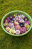 KAPUNDA PLANTS, BATH. GREEN BOWL WITH HELLEBORES FLOATING ON WATER. MOSS, GREEN, PINK, BLACK, PURPLE, WHITE, PEACH, APRICOT, FLOWERS, MARCH, FLOWERHEADS, LENTEN