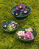 KAPUNDA PLANTS, BATH. GREEN MOROCCAN BOWLS WITH HELLEBORES FLOATING ON WATER. MOSS, GREEN, PINK, BLACK, PURPLE, WHITE, PEACH, APRICOT, FLOWERS, MARCH, FLOWERHEADS, LENTEN