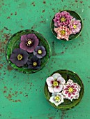 KAPUNDA PLANTS, BATH. GREEN MOROCCAN BOWLS WITH HELLEBORES FLOATING ON WATER. TABLE, GREEN, PINK, BLACK, PURPLE, WHITE, PEACH, APRICOT, FLOWERS, MARCH, FLOWERHEADS, LENTEN