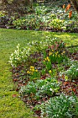 KAPUNDA PLANTS, BATH: LAWN, HELLEBORES. LENTEN, PERENNIALS, BORDERS, BEDS, FLOWERBEDS, GROUNDCOVER, MARCH, LATE WINTER, EARLY SPRING, SNOWDROPS, DAFFODILS, SKIMMIA