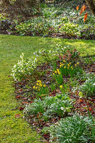 KAPUNDA_PLANTS_BATH_LAWN_HELLEBORES_LENTEN_PERENNIALS_BORDERS_BEDS_FLOWERBEDS_GROUNDCOVER_MARCH_LATE