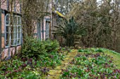 OLD COUNTRY FARM, WORCESTERSHIRE: BRICK PATH COVERED IN MOSS BESIDE HOUSE WITH HELEN BALLARD HELLEBORE BORDER OF HELLEBORUS X HYBRIDUS. PERENNIALS, BORDERS, MARCH