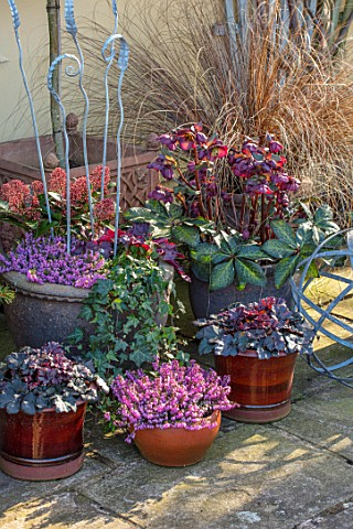 JOHN_MASSEY_GARDEN_ASHWOOD_NURSERIES_WORCESTERSHIRE_CONTAINERS_TERRACE_POTS_ERICA_DECEMBER_RED_SKIMM