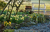 JOHN MASSEY GARDEN, ASHWOOD NURSERIES, WORCESTERSHIRE: SHADY BORDER, WHITE METAL SEAT, BENCH, PHORMIUM, ROCKS, NARCISSUS SUNSHINE SUE, TOPOLINO, TERRACOTTA CONTAINER, MARCH