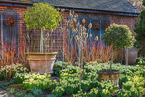 JOHN_MASSEY_GARDEN_ASHWOOD_NURSERIES_WORCESTERSHIRE_BORDER_WITH_DAFFODILS__NARCISSUS_TRENA_AGM_SPRIN