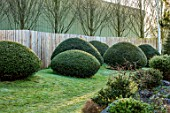 JOHN MASSEY GARDEN, ASHWOOD NURSERIES, WORCESTERSHIRE: WOODEN FENCES, FENCING, LAWN, CLIPPED TOPIARY YEW, TAXUS BACCATA, YEWS, EVERGREENS, SHRUBS, MARCH, SPRING, HEDGES, HEDGING