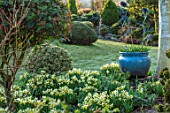 JOHN MASSEY GARDEN, ASHWOOD NURSERIES, WORCESTERSHIRE: BORDER WITH BLUE GLAZED CONTAINER, TULIPS, MARCH, NARCISSUS TRENA, AGM, SPRING, LAWN, BEDS, FLOWERBEDS, BULBS