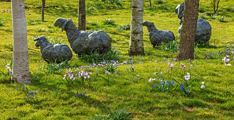 JOHN_MASSEY_GARDEN_ASHWOOD_NURSERIES_WORCESTERSHIRE_MEADOW_WITH_BETULA_METAL_SHEEP_SCULPTURES_BY_CHR