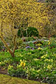 JOHN MASSEY GARDEN, ASHWOOD NURSERIES, WORCESTERSHIRE: WOODLAND BORDER WITH CORNUS OFFICINALIS IN FLOWER, HELLEBORES, PRIMULAS, SHADE, SHADY