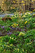 JOHN MASSEY GARDEN, ASHWOOD NURSERIES, WORCESTERSHIRE: WOODLAND BORDER WITH HELLEBORES, PRIMULAS, DAFFODILS, NARCISSUS, SHADE, SHADY
