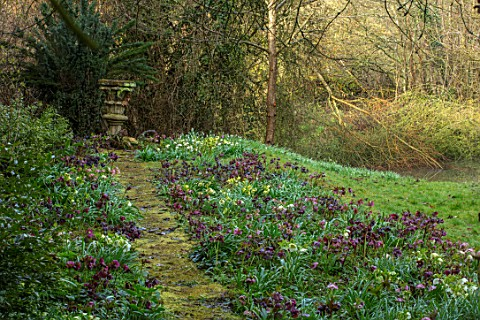OLD_COUNTRY_FARM_WORCESTERSHIRE_BRICK_PATH_COVERED_IN_MOSS_BESIDE_HOUSE_WITH_HELEN_BALLARD_HELLEBORE