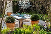 ASCOT SPRING GARDEN SHOW: THE COURTYARD DESIGNED BY JOE PERKINS: TABLE, CHAIRS, TERRACOTTA CONTAINER, CLIPPED BOX, TOPIARY, PATIO, AMELANCHIER LAMARKII, HEDGES, HEDGING, DINING