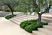 PORTO HELI, GREECE, DESIGNER THOMAS DOXIADIS: VILLA GARDEN. OLIVE TREES GROWING OUT OF STEPS WITH ROSEMARY. GREEK, LANDSCAPE, VILLAS