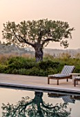 PORTO HELI, GREECE, DESIGNER THOMAS DOXIADIS: VILLA GARDEN. SWIMMING POOL, OLIVE TREE, SUN LOUNGERS, MEDITERRANEAN, WILD, DRY, GREEK, DAWN, REFLECTED, REFLECTIONS