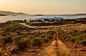ANTIPAROS, GREECE, DESIGNER THOMAS DOXIADIS: OLIVE GROVE DOWN TO VILLA BY THE SEA, DAWN, GREEK, LANDSCAPE, HYPARRHENIA HIRTA
