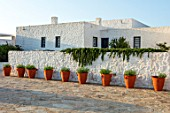 ANTIPAROS, GREECE, DESIGNER THOMAS DOXIADIS:WHITE PAINTED VILLA WITH ROSEMARY CASCADING OVER WALL AND TERRACOTTA CONTAINERS. GREEK, LANDSCAPE