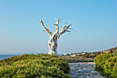 ANTIPAROS, GREECE, DESIGNER THOMAS DOXIADIS: VILLA GARDEN WITH STONE PATH AND WHITE METAL OLIVE TREE SCULPTURE LOOKING OUT TO SEA. PATHS