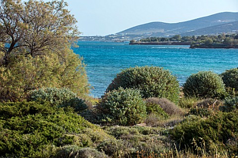 ANTIPAROS_GREECE_DESIGNER_THOMAS_DOXIADIS_VILLA_GARDEN_WITH_CLIPPED_SHRUBS_AND_SEA