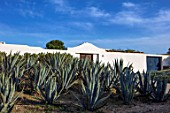 ANTIPAROS, GREECE, DESIGNER THOMAS DOXIADIS: VILLA GARDEN WITH AGAVE CACTUS AND WHITE WALL, AGAVE AMERICANA