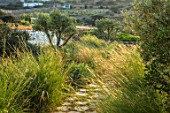 ANTIPAROS, GREECE, DESIGNER THOMAS DOXIADIS: PATH WITH GRASSES IN VILLA GARDEN BY THE SEA. GREEK, MEDITERRANEAN, HYPARRHENIA HIRTA, COMMON THATCHING GRASS, COOLATAI, OLIVES