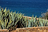 ANTIPAROS, GREECE, DESIGNER THOMAS DOXIADIS: AGAVES GROWING BESIDE THE SEA. VILLA GARDEN, LANDSCAPE, GREEK, AGAVE AMERICANA