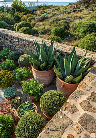 ANTIPAROS_GREECE_DESIGNER_THOMAS_DOXIADIS_PATIO_CACTUS_GROWING_IN_TERRACOTTA_CONTAINERS_SUCCULENTS_S