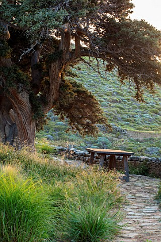 ANTIPAROS_GREECE_DESIGNER_THOMAS_DOXIADISPATH_GRASSES_WOODEN_BENCH_AND_JUNIPER_TREE