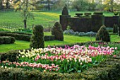 WARDINGTON MANOR, OXFORDSHIRE: THE LAND GARDENERS - SPRING, TULIPS GROWING IN CUTTING GARDEN. YEW, TOPIARY, HEDGES, HEDGING, TULIPA, BULBS, FLOWERING