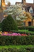 WARDINGTON MANOR, OXFORDSHIRE: THE LAND GARDENERS - SPRING, TULIPS GROWING IN CUTTING GARDEN. YEW, TOPIARY, HEDGES, HEDGING, TULIPA, BULBS, FLOWERING, TAXUS, AMELANCHIER