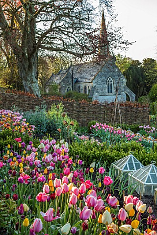 THE_OLD_PARSONAGE_LITTLE_BREDY_DORSET_SPRING_POTAGER_WITH_TULIPS_IN_PINK_DEEP_RED_AND_LEMON_SHADES_G