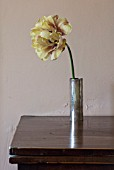 THE OLD PARSONAGE, DORSET: SIMPLE CYLINDRICAL VASE WITH SINGLE TULIPA LA BELLE EPOQUE. FLOWER, LEMON YELLOW, NEUTRAL, INTERIOR DESIGN, HOME.
