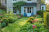 THE OLD PARSONAGE, DORSET: FRONT GARDEN - FORMER CROQUET LAWN BEDS WITH TULIPS, BOX BALLS AND PATH LEADING TO HOUSE. SPRING, BORDER, FLOWERS