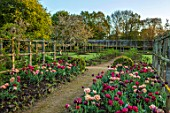 PARHAM HOUSE AND GARDENS, SUSSEX: BORDERS WITH TULIPS - LA BELLE EPOQUE, BLACK HERO AND RED ANTRACIET. BULBS, FLOWERS, BLOOMS, SPRING, PATHS
