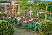 PARHAM HOUSE AND GARDENS, SUSSEX: BORDER WITH TULIPS - LA BELLE EPOQUE, BLACK HERO AND RED ANTRACIET. BULBS, FLOWERS, BLOOMS, SPRING, PATHS