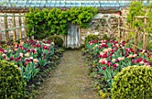 PARHAM HOUSE AND GARDENS, SUSSEX: BORDER WITH TULIPS - LA BELLE EPOQUE, BLACK HERO AND RED ANTRACIET. BULBS, FLOWERS, BLOOMS, SPRING, PATHS, WOODEN DOOR