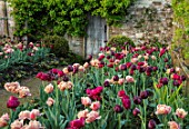 PARHAM HOUSE AND GARDENS, SUSSEX: BORDER WITH TULIPS - LA BELLE EPOQUE, BLACK HERO AND RED ANTRACIET. BULBS, FLOWERS, BLOOMS, SPRING, PATH, DOOR, CUTTING, GARDEN