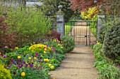 PARHAM HOUSE AND GARDENS, SUSSEX: PURPLE AND GOLD BORDER - GATE, PATHS, TULIPS, TULIPA PURPLE DREAM, TULIPA GOLDEN APELDOORN. SPRING