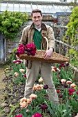PARHAM HOUSE AND GARDENS, SUSSEX: HEAD GARDENER TOM BROWN HEAD GARDENER CUTTING FLOWERS OF TULIP RED ANTRACIET. CUTTING GARDEN