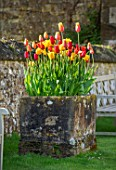 PARHAM HOUSE AND GARDENS, SUSSEX: STONE TROUGH, CONTAINER PLANTED WITH TULIPS - TULIPA EL NINO, RED PROUD, GOLDEN APELDOORN, BALLERINA