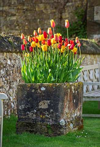 PARHAM_HOUSE_AND_GARDENS_SUSSEX_STONE_TROUGH_CONTAINER_PLANTED_WITH_TULIPS__TULIPA_EL_NINO_RED_PROUD