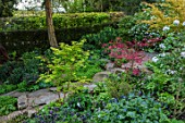 MORTON HALL, WORCESTERSHIRE: THE ROCKERY - SHADE, SHADY, GREEN, FOLIAGE, ROCKS, MAPLES, ACER PALMATUM DESHOJO, SANGO KAKU, KATSURA, VIBURNUM XCARLESII CHARIS. SPRING, STEPS