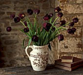 STILL LIFE OF BLACK TULIPS IN VASE - TULIPA BLACK HERO, DARK, PURPLE, TULIPS, SPRING, BULBS, ARRANGEMENTS