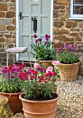 THE CONIFERS, OXFORDSHIRE: TERRACOTTA CNTAINERS PLANTED WITH WALLFLOWERS AND TULIPS. GRAVEL, COURTYARD, CHAIR, CUSHIONS, SPRING, POTS, FRONT, DOOR