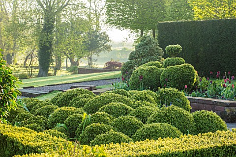MITTON_MANOR_STAFFORDSHIRE_CLOUD_TOPIARY_BOX_SPHERES_TOPIARY_GARDEN_FORMAL_COUNTRY_HEDGES_HEDGING_EV