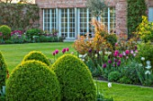 MORTON HALL, WORCESTERSHIRE: BORDER BESIDE LAWN. PINK, WHITE TULIPS AND ROSES. BORDERS, COUNTRY, GARDENS, FLOWERS, FLOWERING, SPRING GREEN, RECREADO, MARIETTE, LASTING LOVE