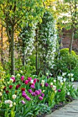 MORTON HALL, WORCESTERSHIRE: BORDER WITH TULIPS - TULIPA SPRING GREEN,  BLUE DIAMOND, LASTING LOVE, MARIETTE, WEISSE BERLINER, CLEMATIS KOREANA BROUGHTON BRIDE, ARCH, ARCHWAY