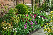 MORTON HALL, WORCESTERSHIRE: BORDER WITH TULIPS - TULIPA SPRING GREEN,  BLUE DIAMOND, LASTING LOVE, MARIETTE, WEISSE BERLINER, CLEMATIS KOREANA BROUGHTON BRIDE