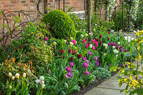 MORTON_HALL_WORCESTERSHIRE_BORDER_WITH_TULIPS__TULIPA_SPRING_GREEN__BLUE_DIAMOND_LASTING_LOVE_MARIET