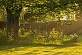 THE MANOR HOUSE, STEVINGTON, BEDFORDSHIRE: TREE AND SWING SEAT IN EARLY MORNING LIGHT. ENGLISH, COUNTRY, GARDEN